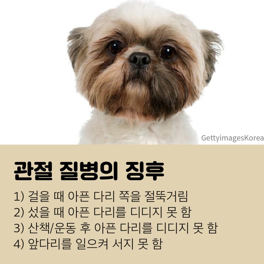 강아지 무릎관절