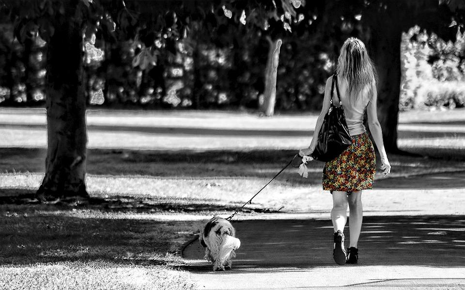 강아지 산책