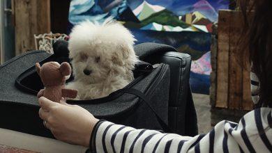 Photo of 실패하는 강아지 목욕 | 볶음이의 개바개