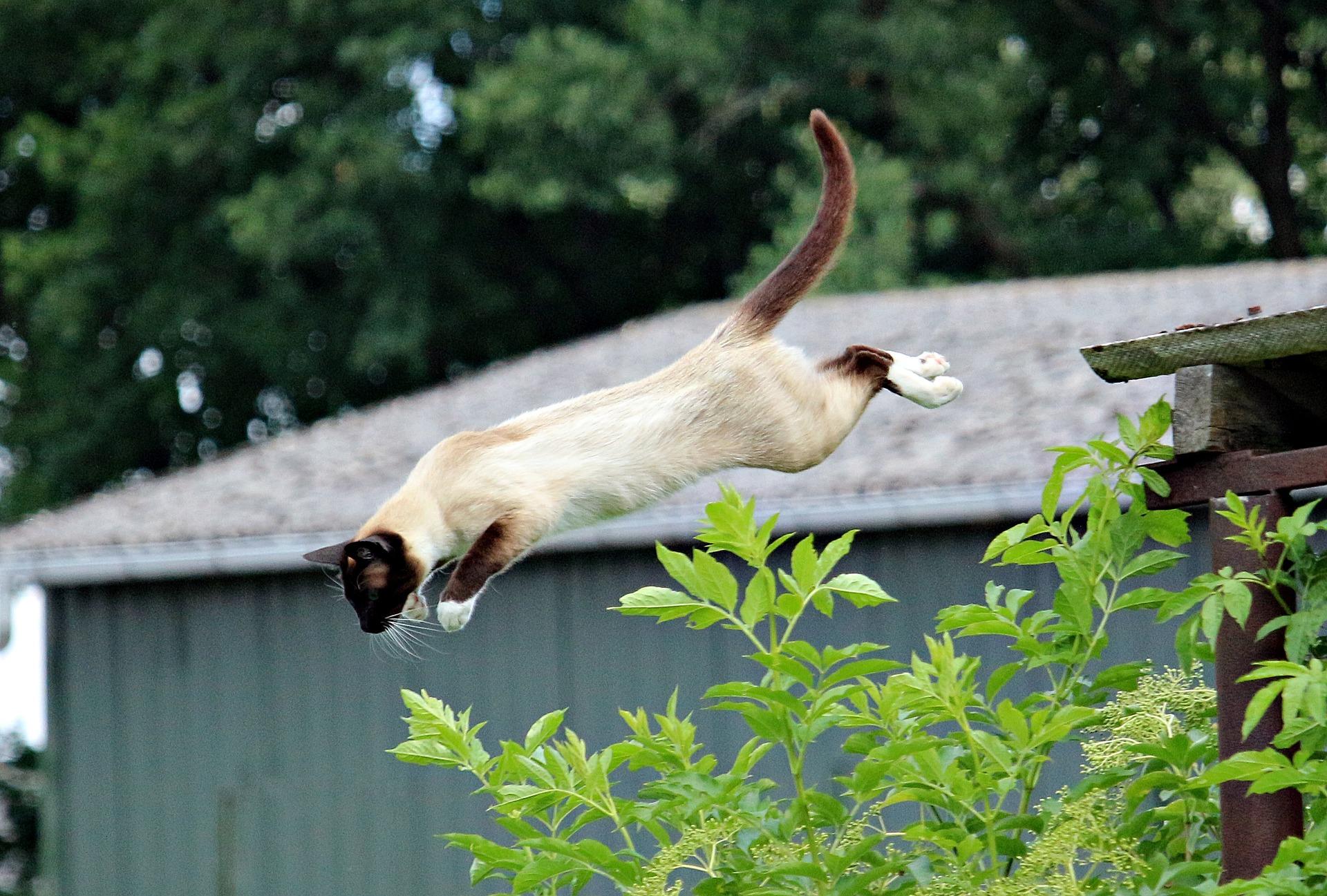 고양이 강아지 매트 후기