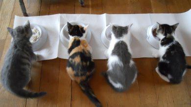 고양이 사료 후기