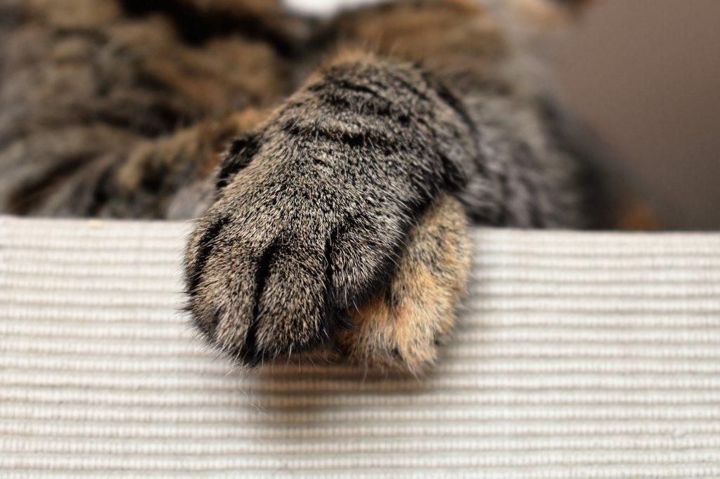 고양이 앞발