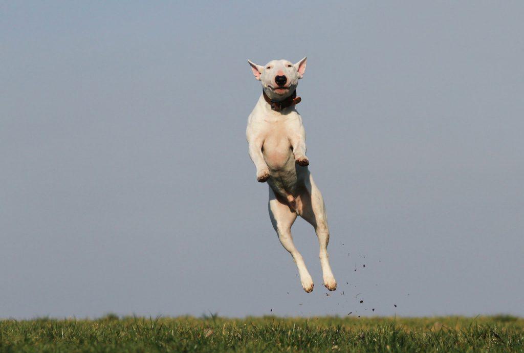 강아지가 점프