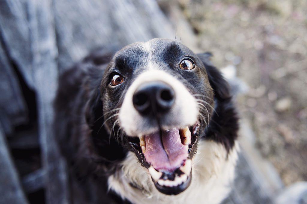 강아지 이빨