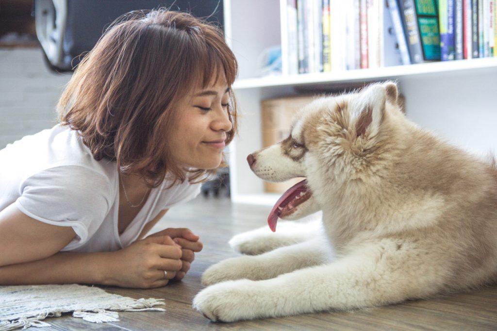 강아지 사랑