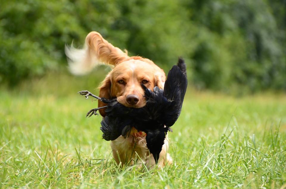 강아지 터그놀이