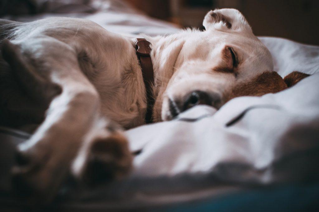 아침잠 강아지