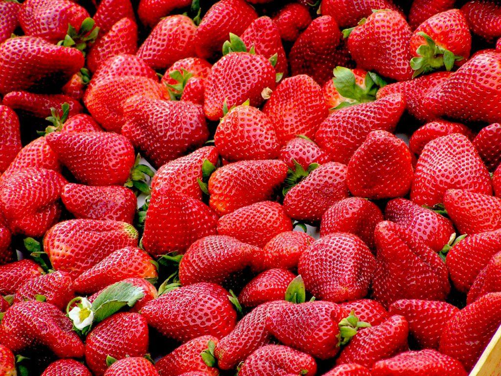 강아지 딸기