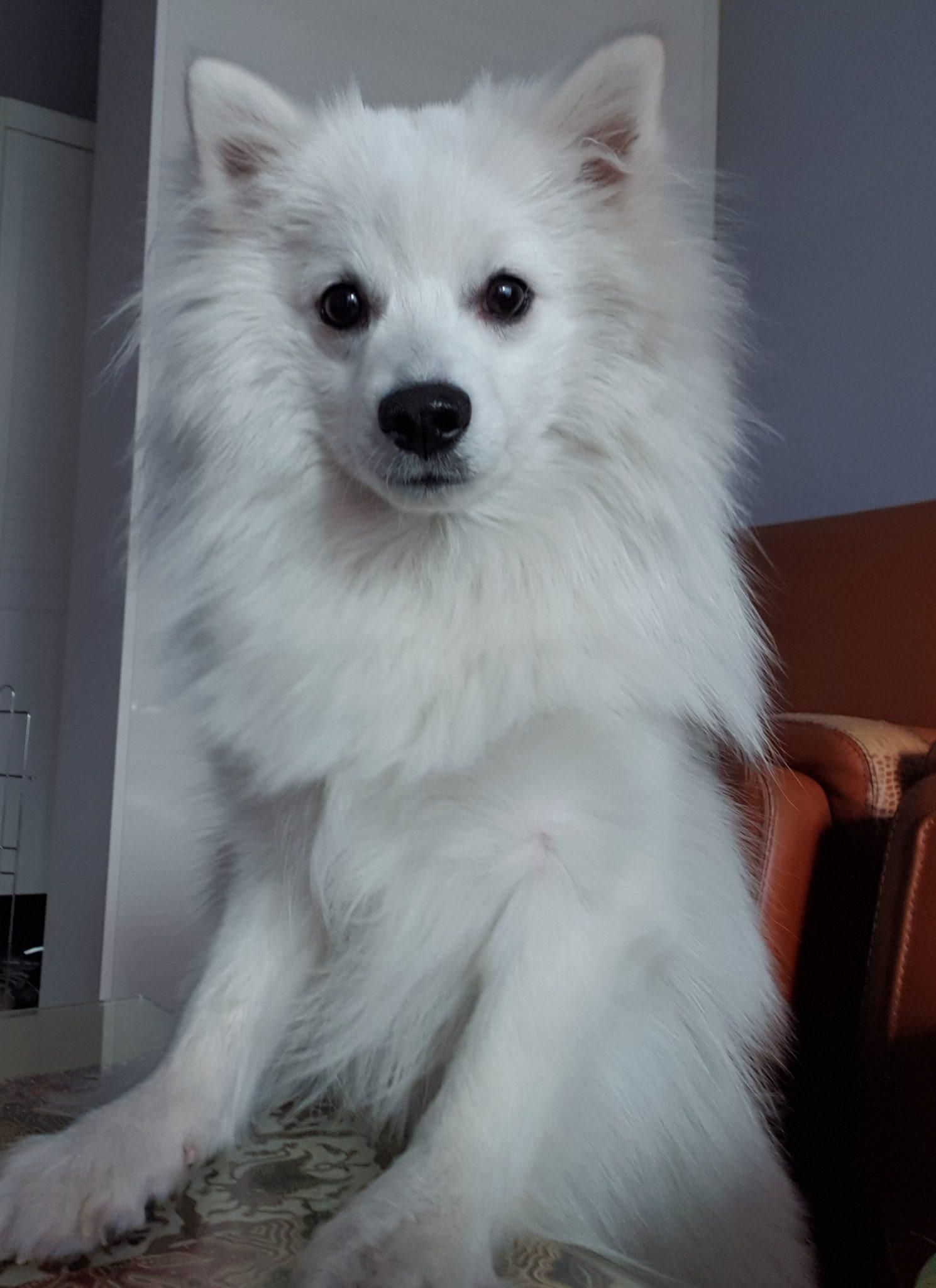 강아지 상추