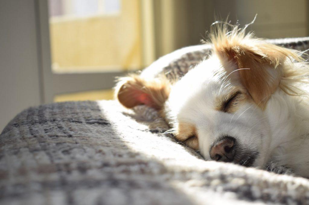 강아지 수면