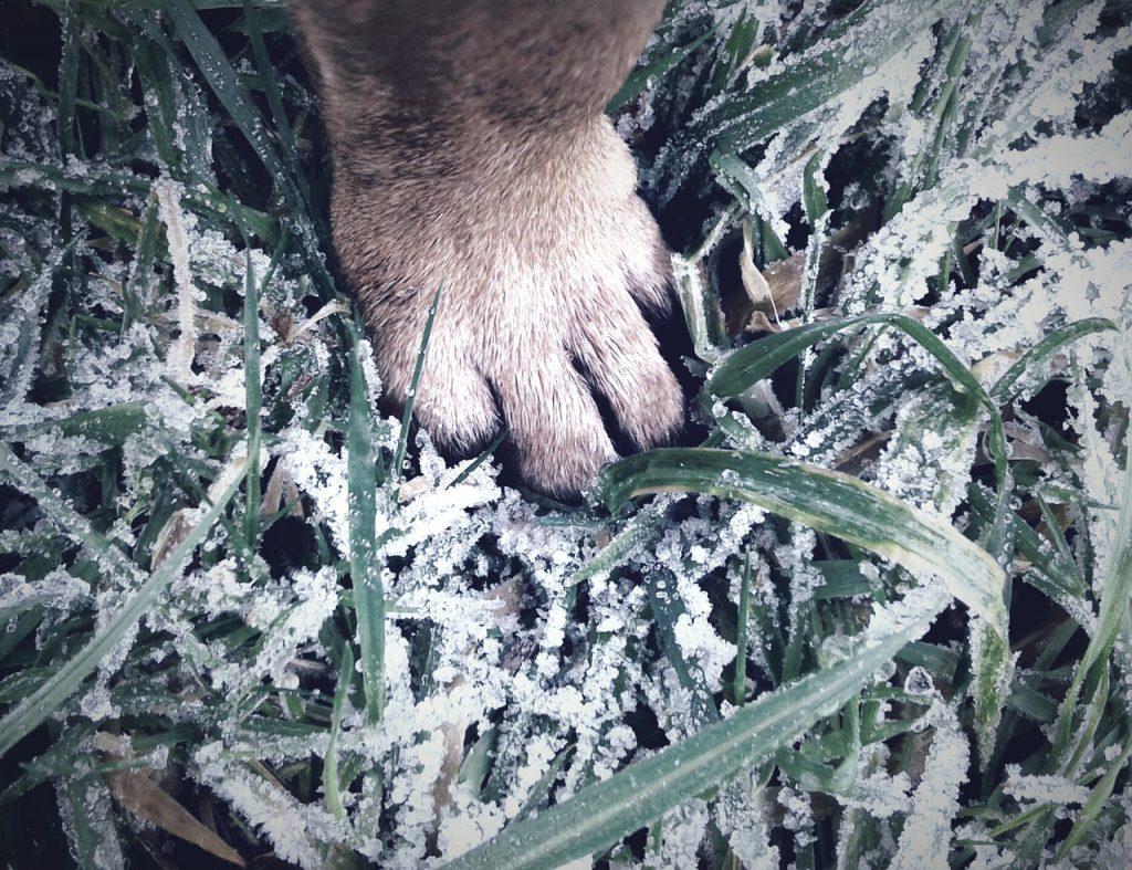 강아지 발바닥