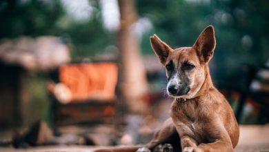 강아지 생존본능