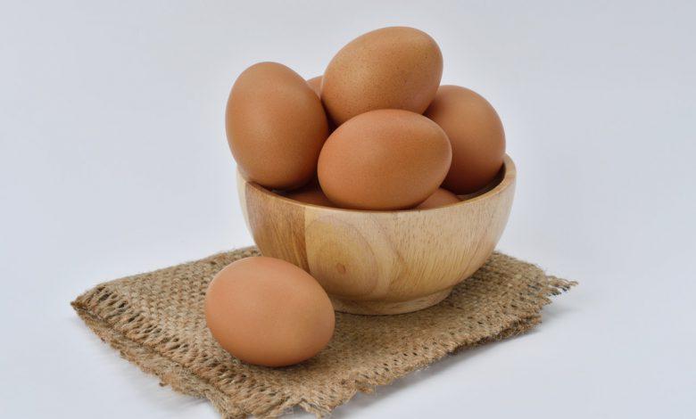 강아지 계란