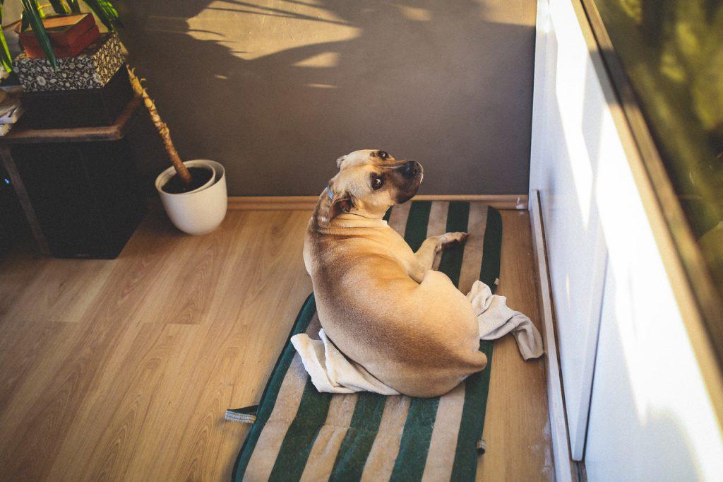 혼자 있는 강아지