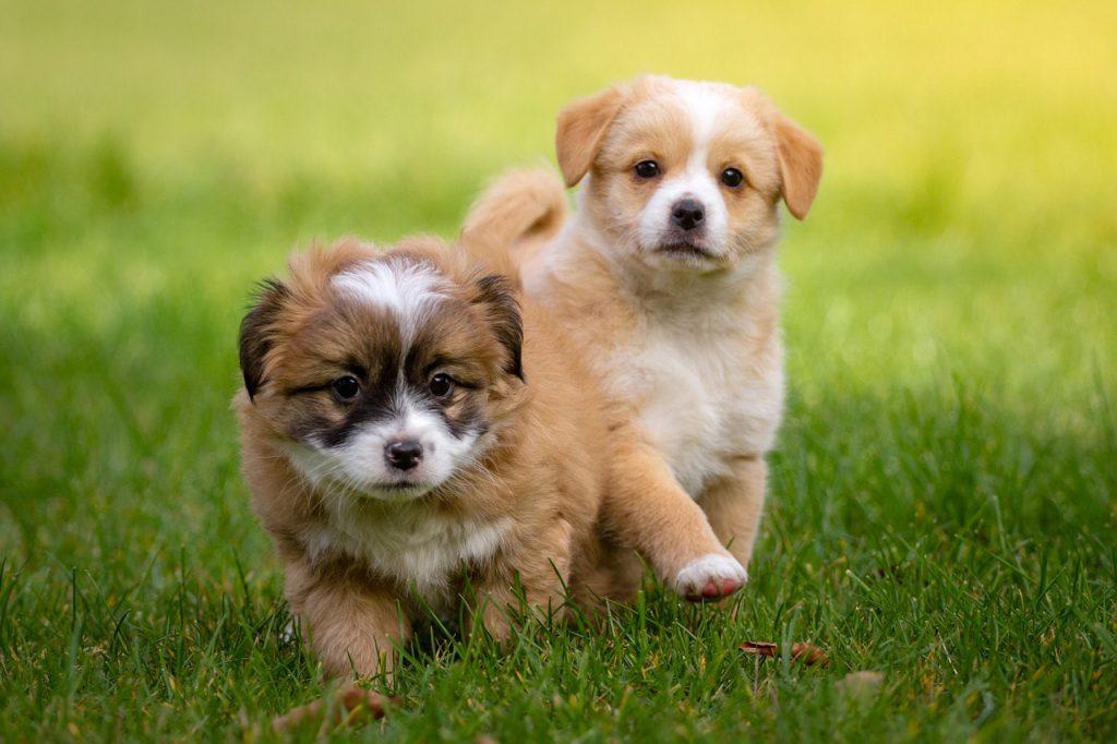 강아지 사회화