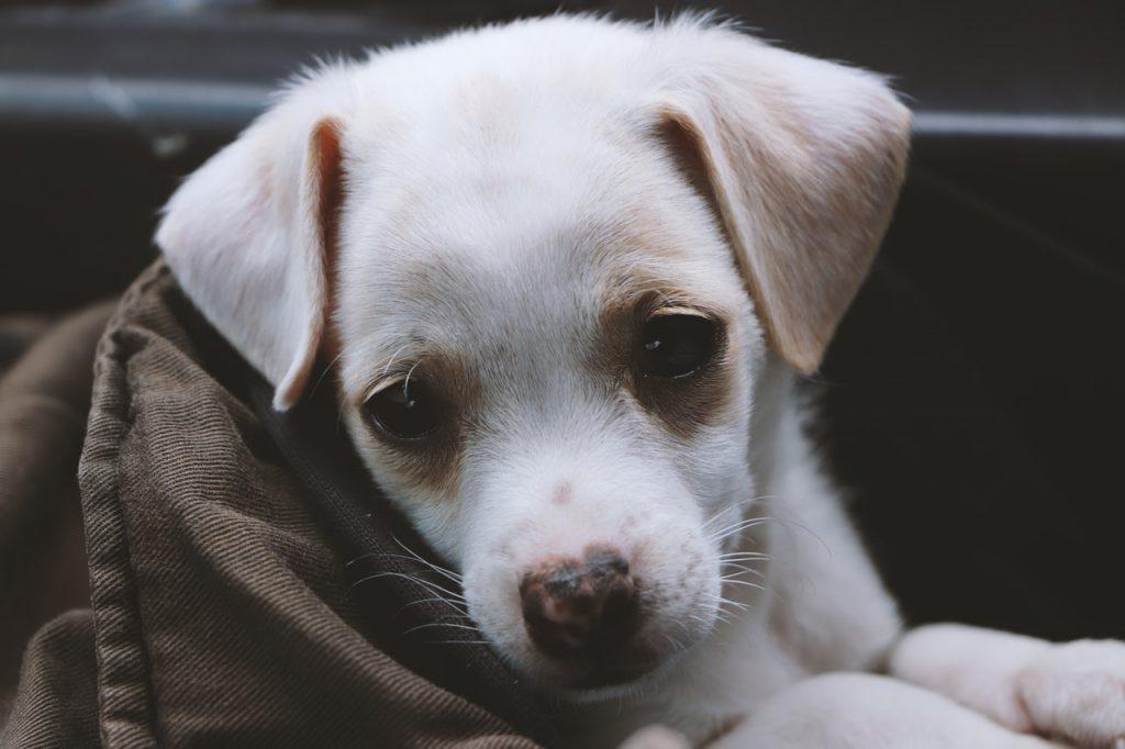 강아지 사료