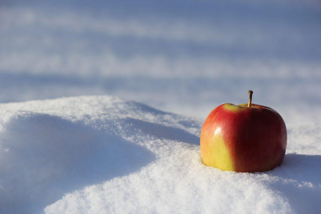 강아지 사과