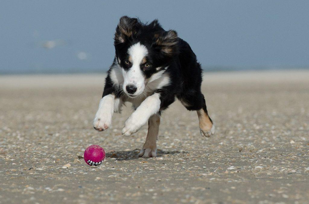 도망치는 강아지