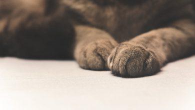 강아지가 자기 발을 물어요