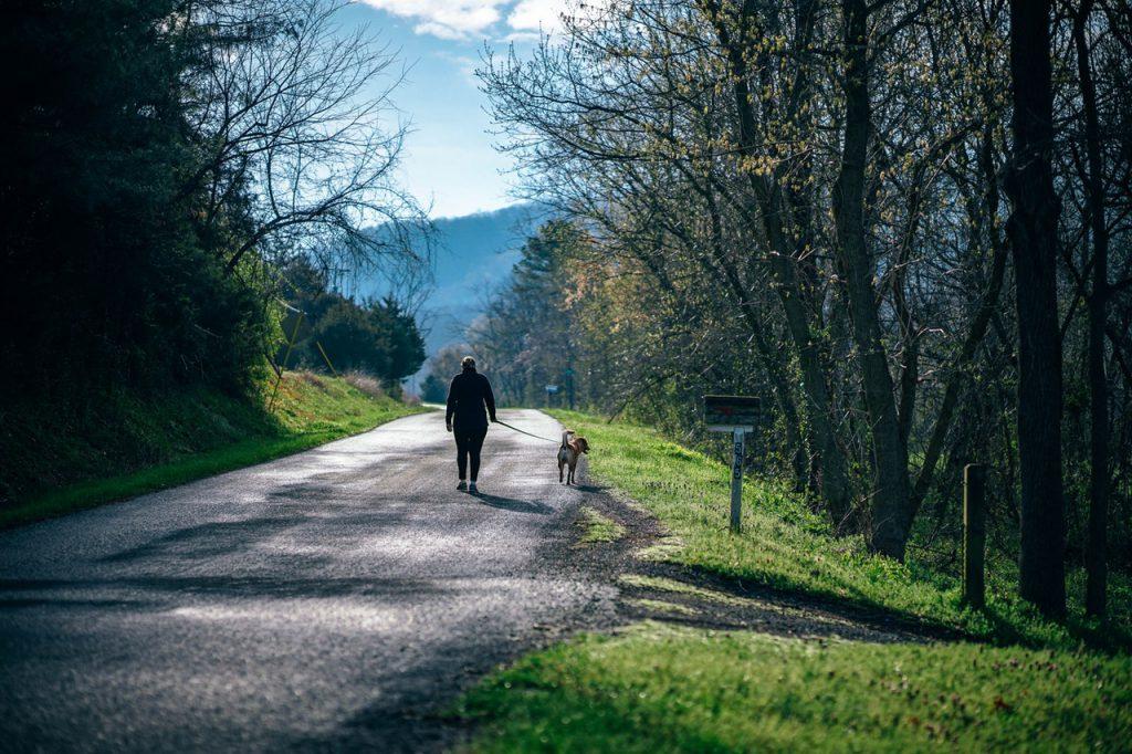 강아지 여름 산책