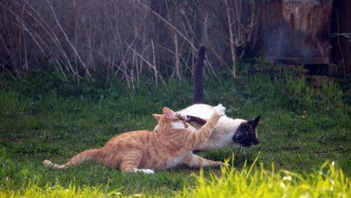 고양이 싸움
