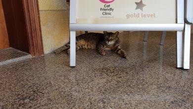 Photo of Cat Friendly Clinic (고양이 친화 병원) 인증이 있다