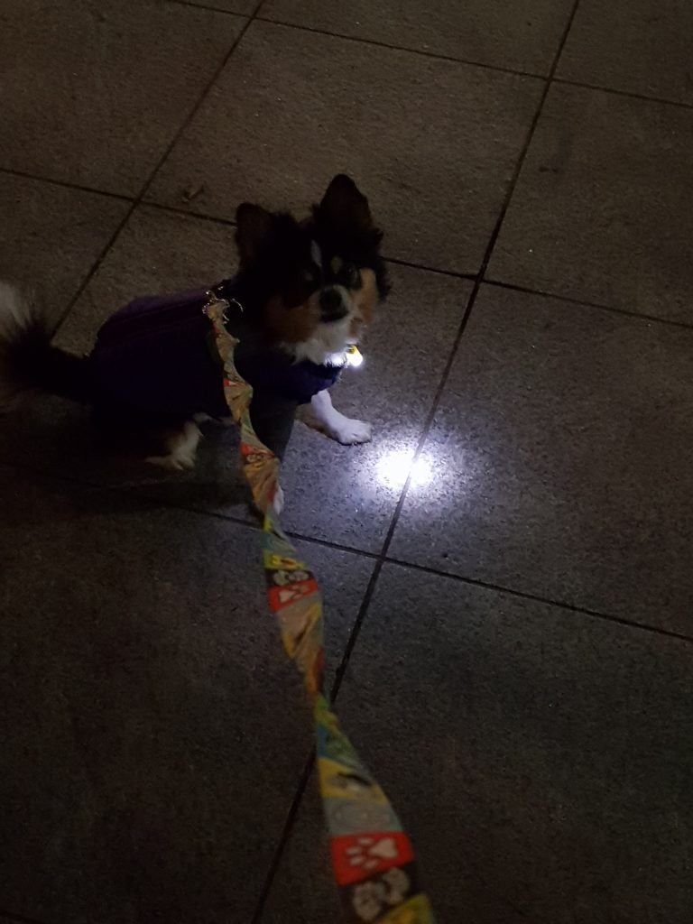 강아지 저녁 산책