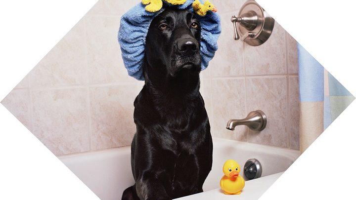 강아지 목욕