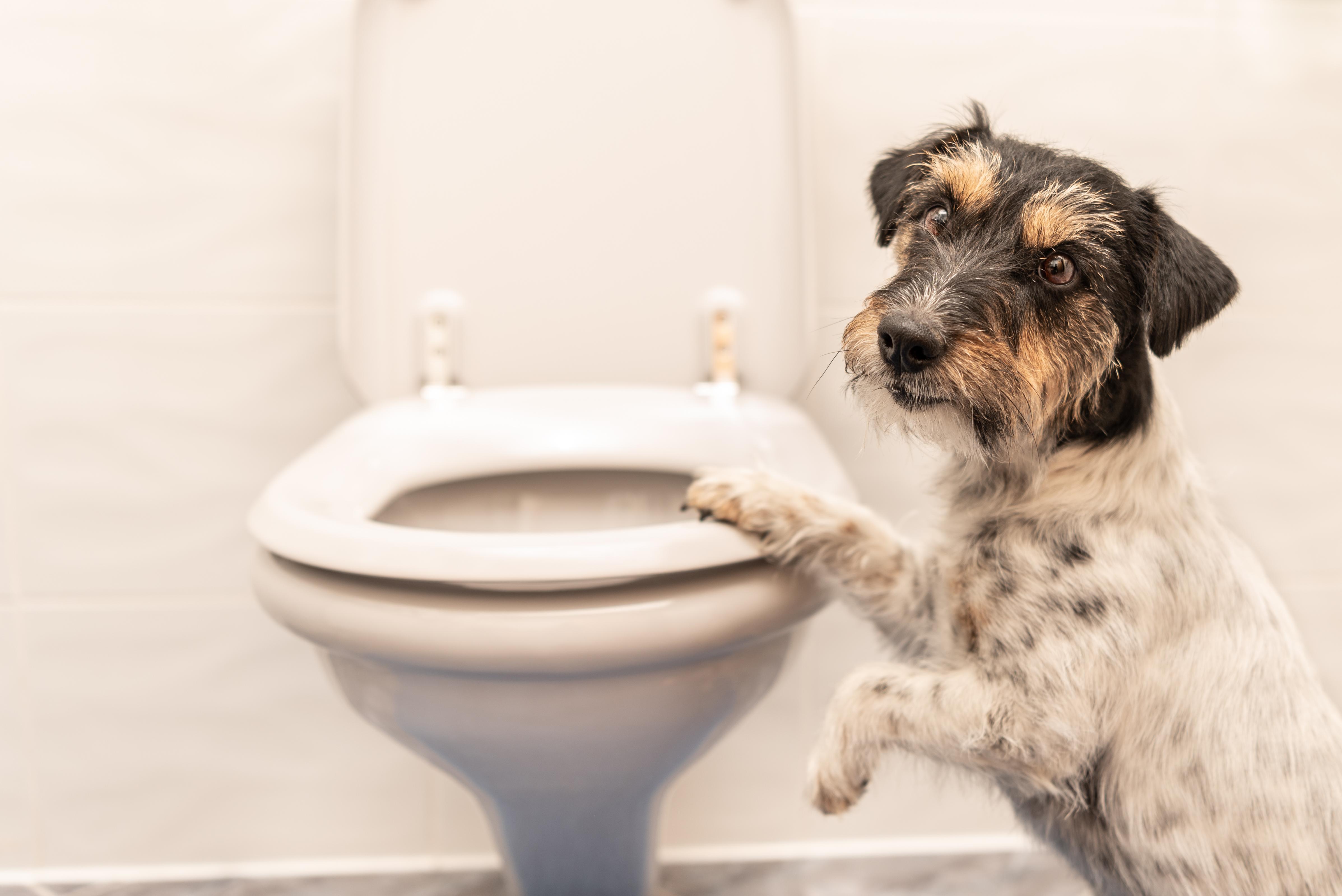 강아지 설사