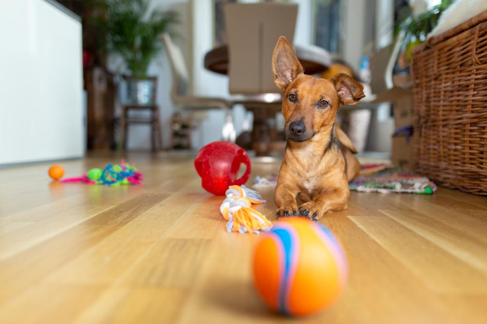 강아지 공놀이