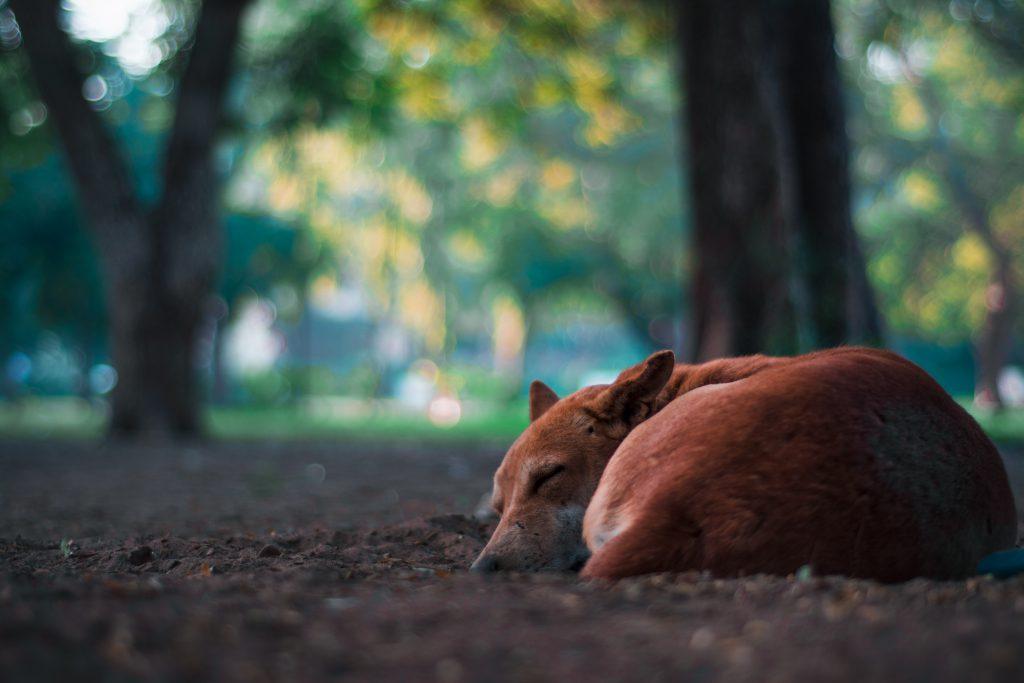 강아지 잠자는 자세