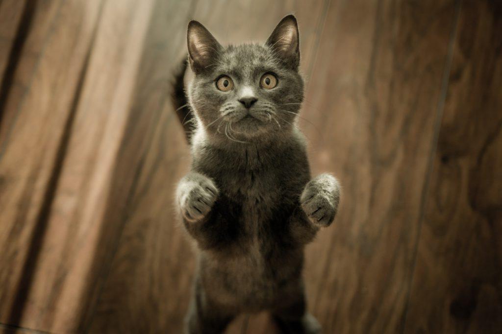 고양이 털 관리