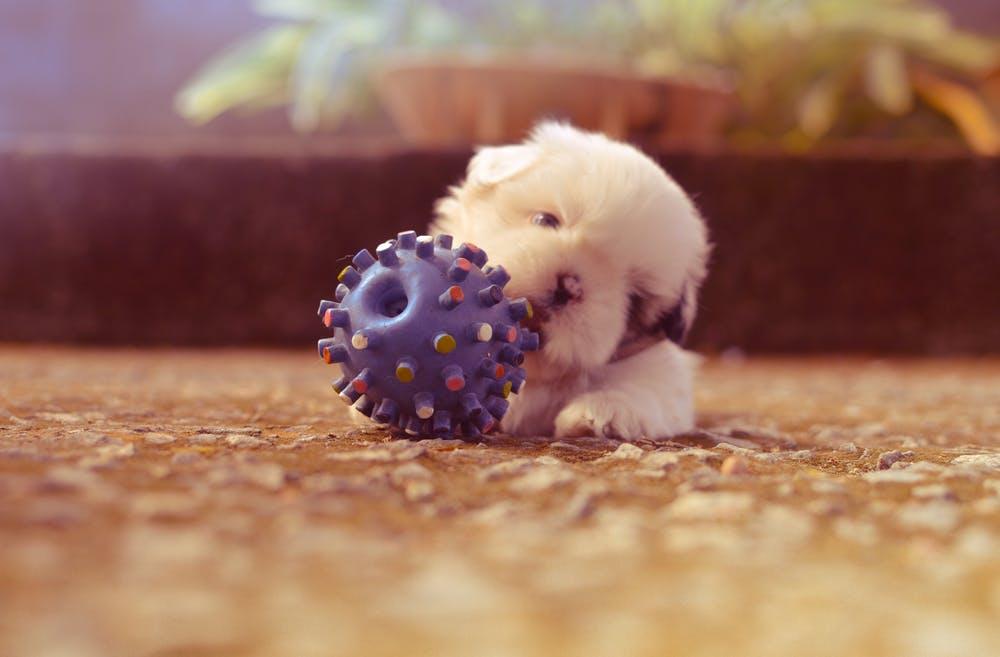 강아지 훈련 시기