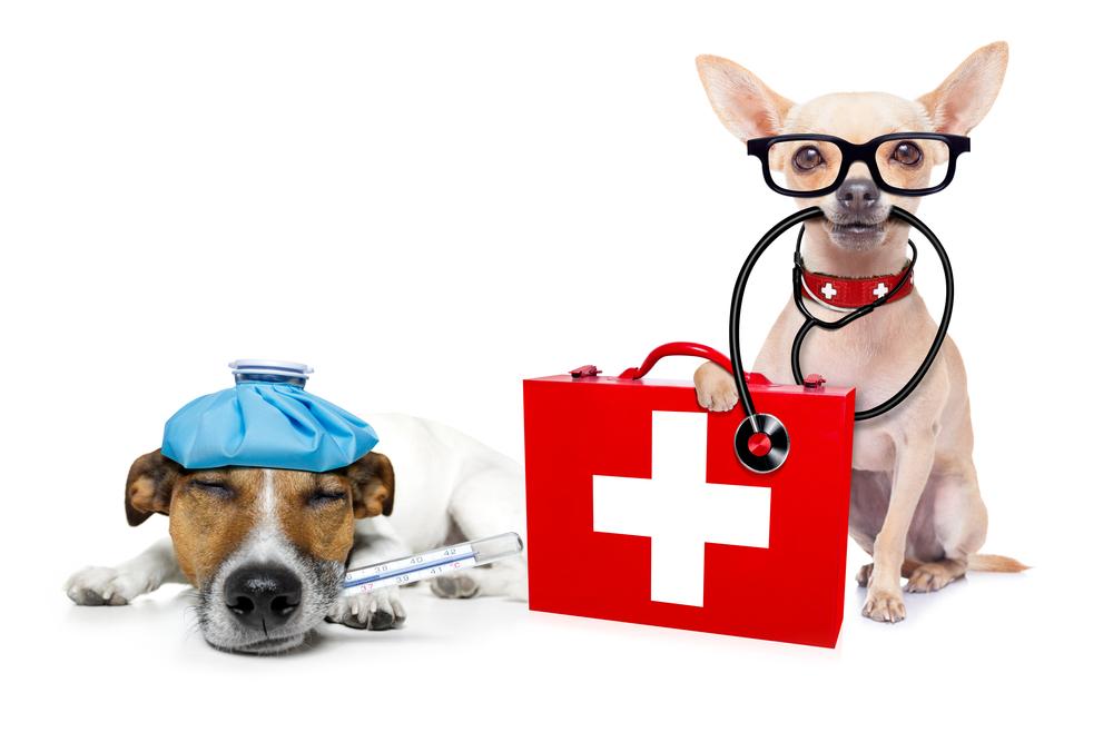 강아지 수술