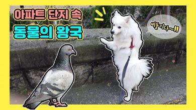 강아지사냥본능