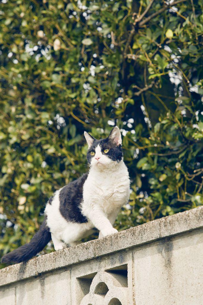 고양이 여행 리포트