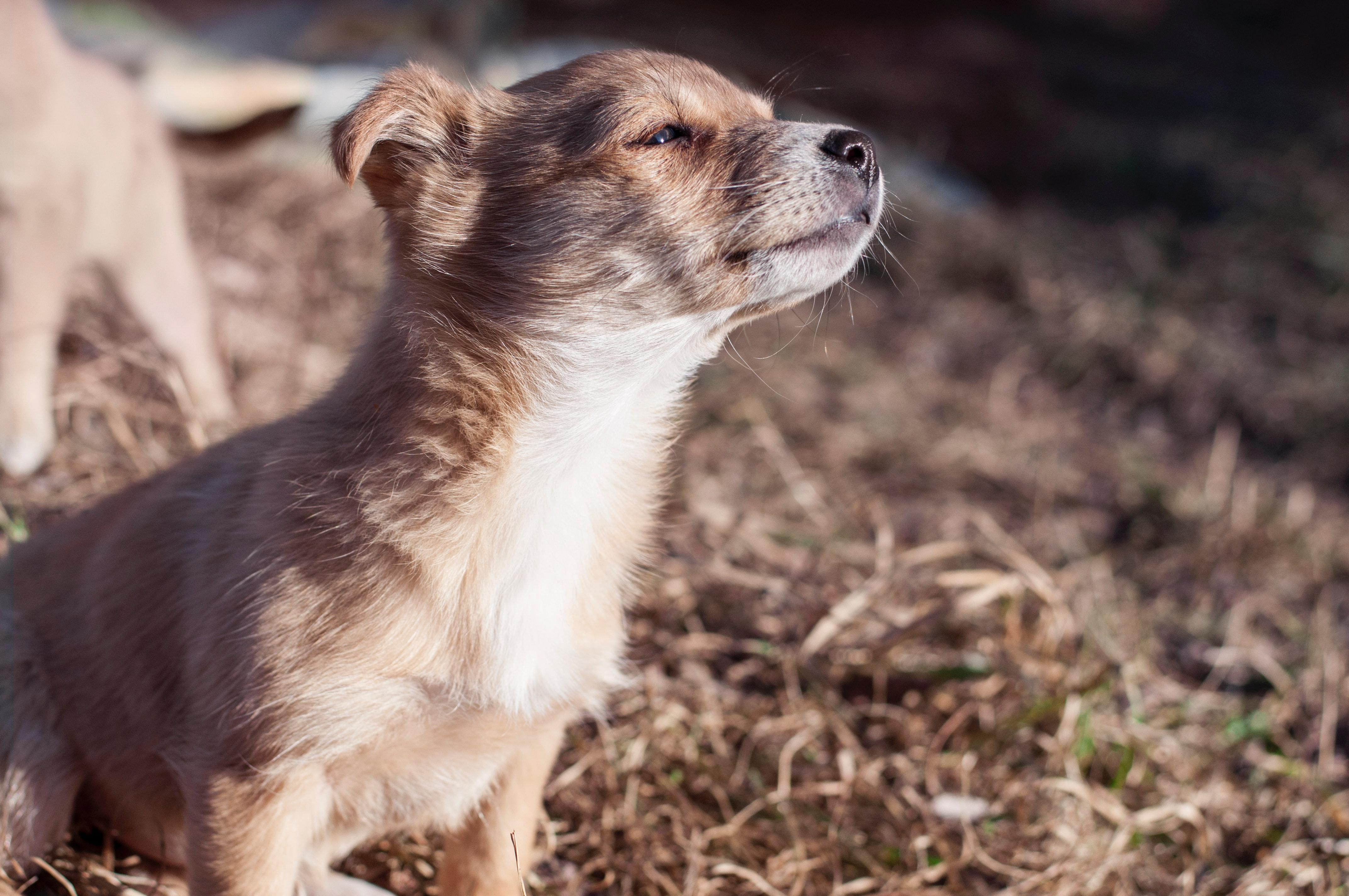 강아지 성장 과정