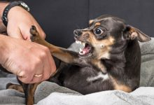강아지 공격성