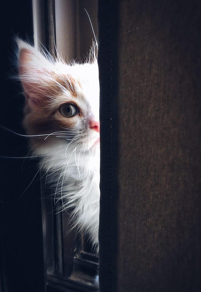 고양이 사람 행동