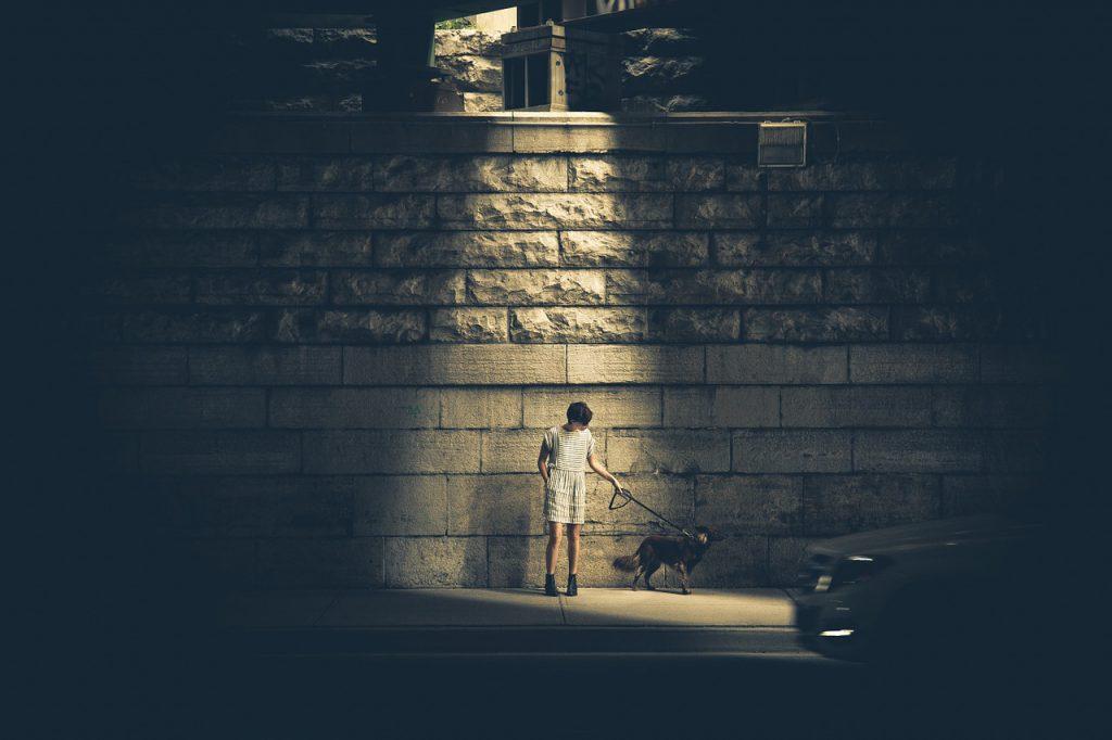 강아지 밤 산책