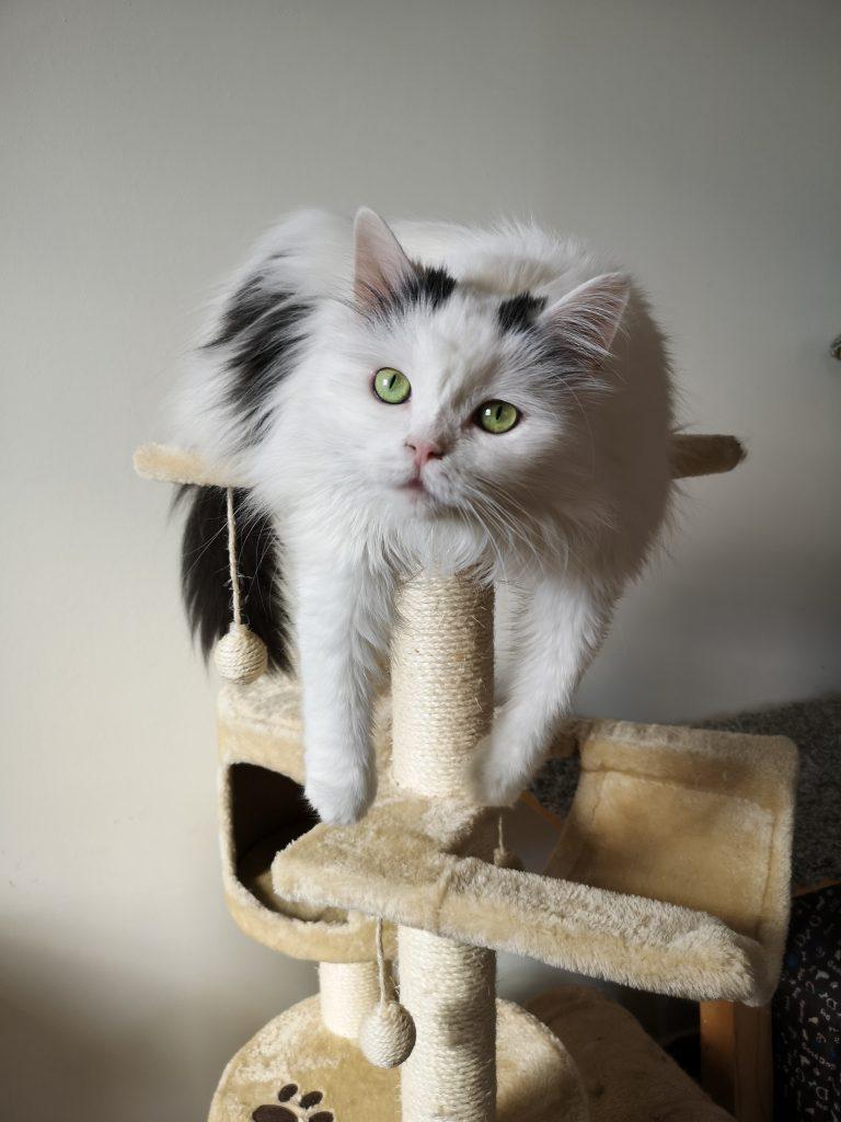 고양이 캣타워