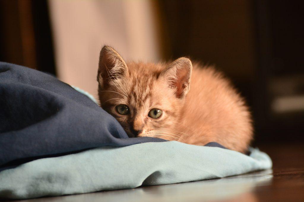 고양이 분리불안