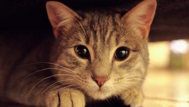 Photo of 고양이 분리불안 증상 및 대처법
