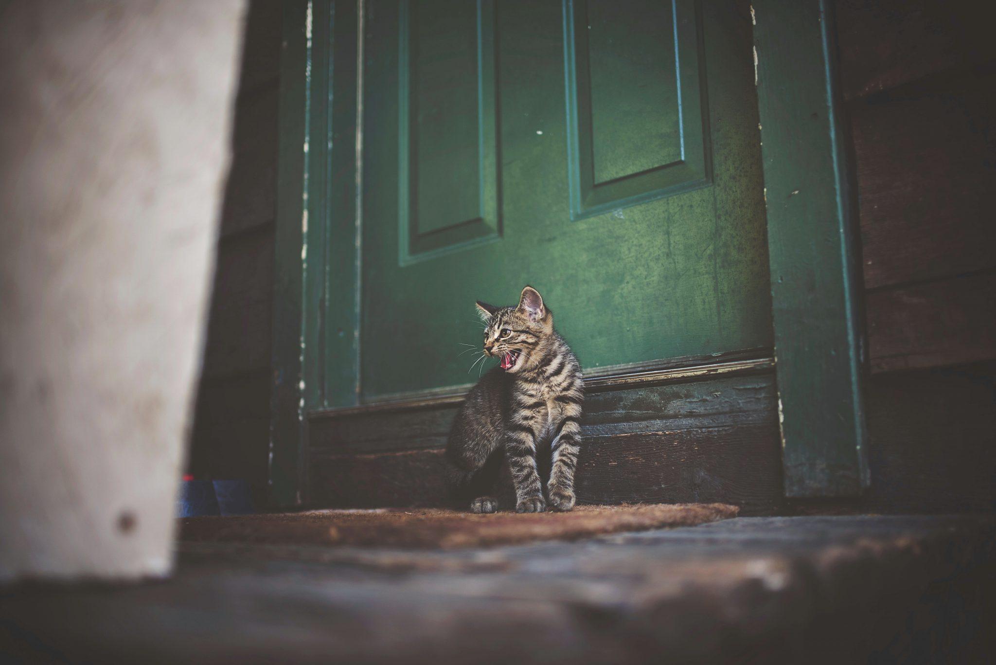 고양이 가출