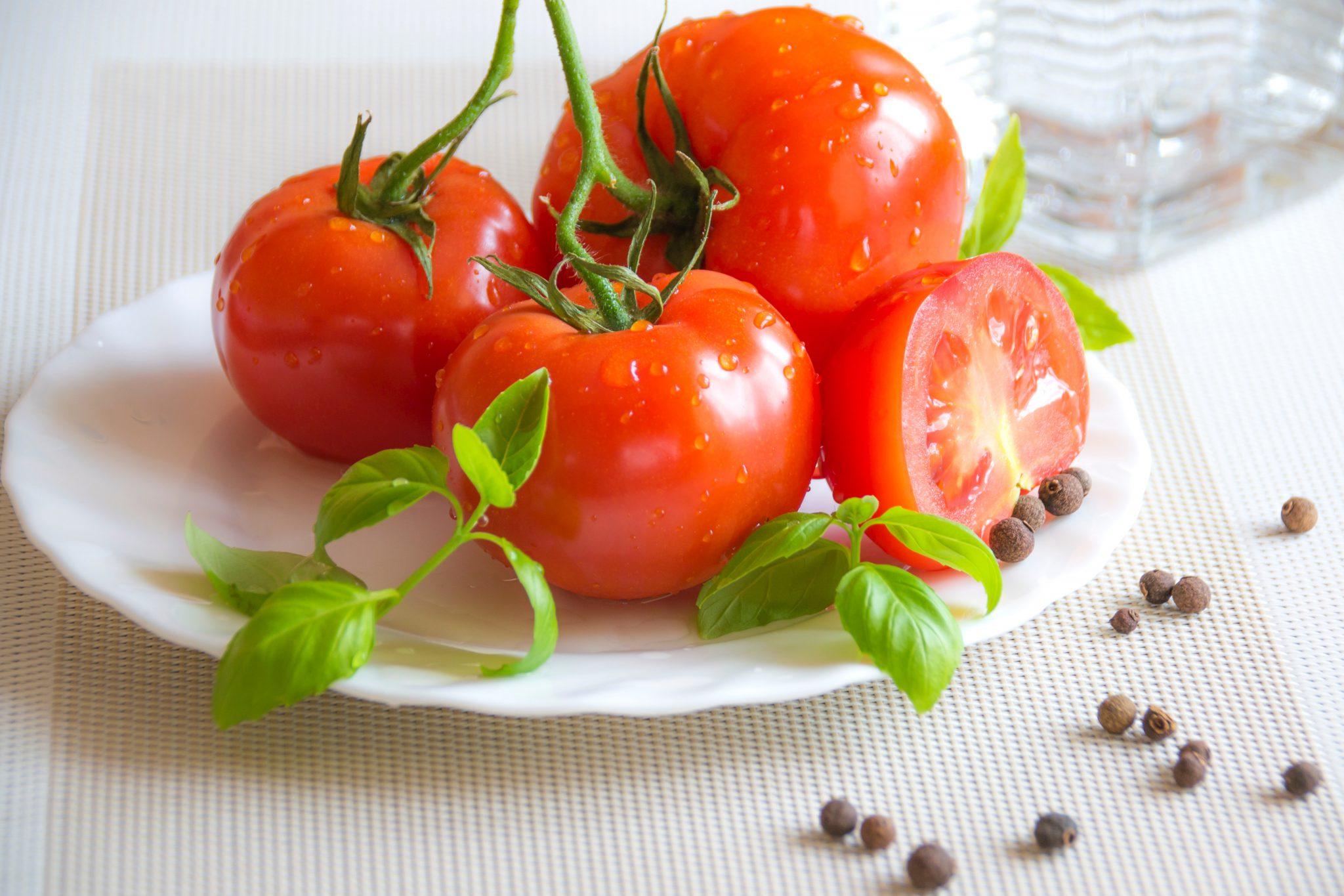 강아지 토마토