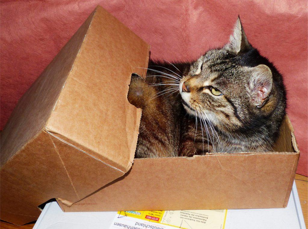 고양이 상자