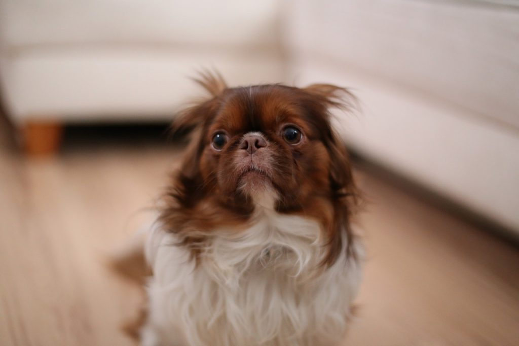 강아지 사춘기