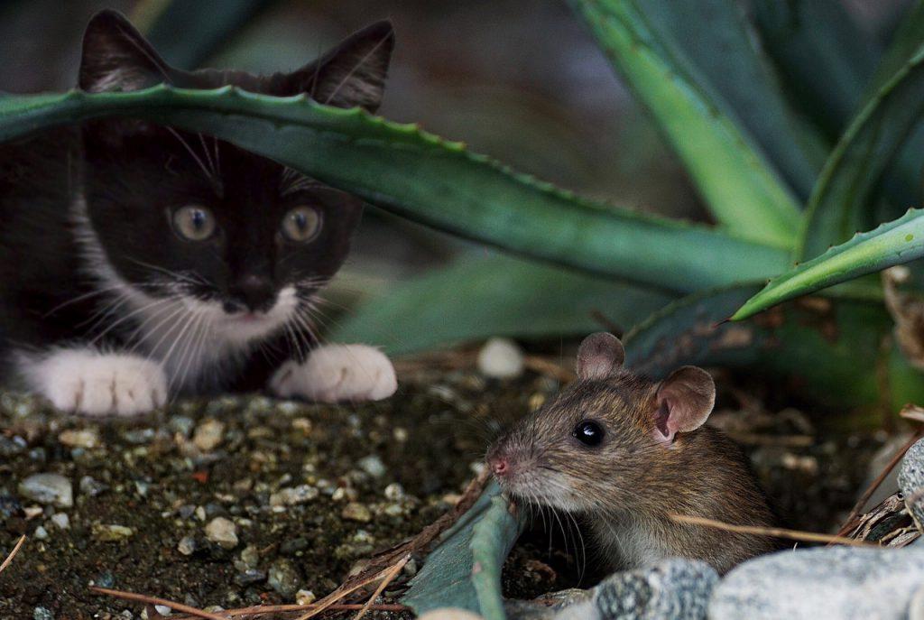 고양이 사냥