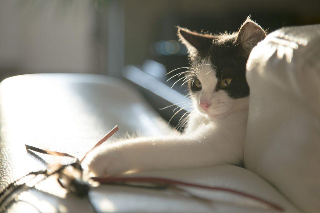 고양이 끈 장난감