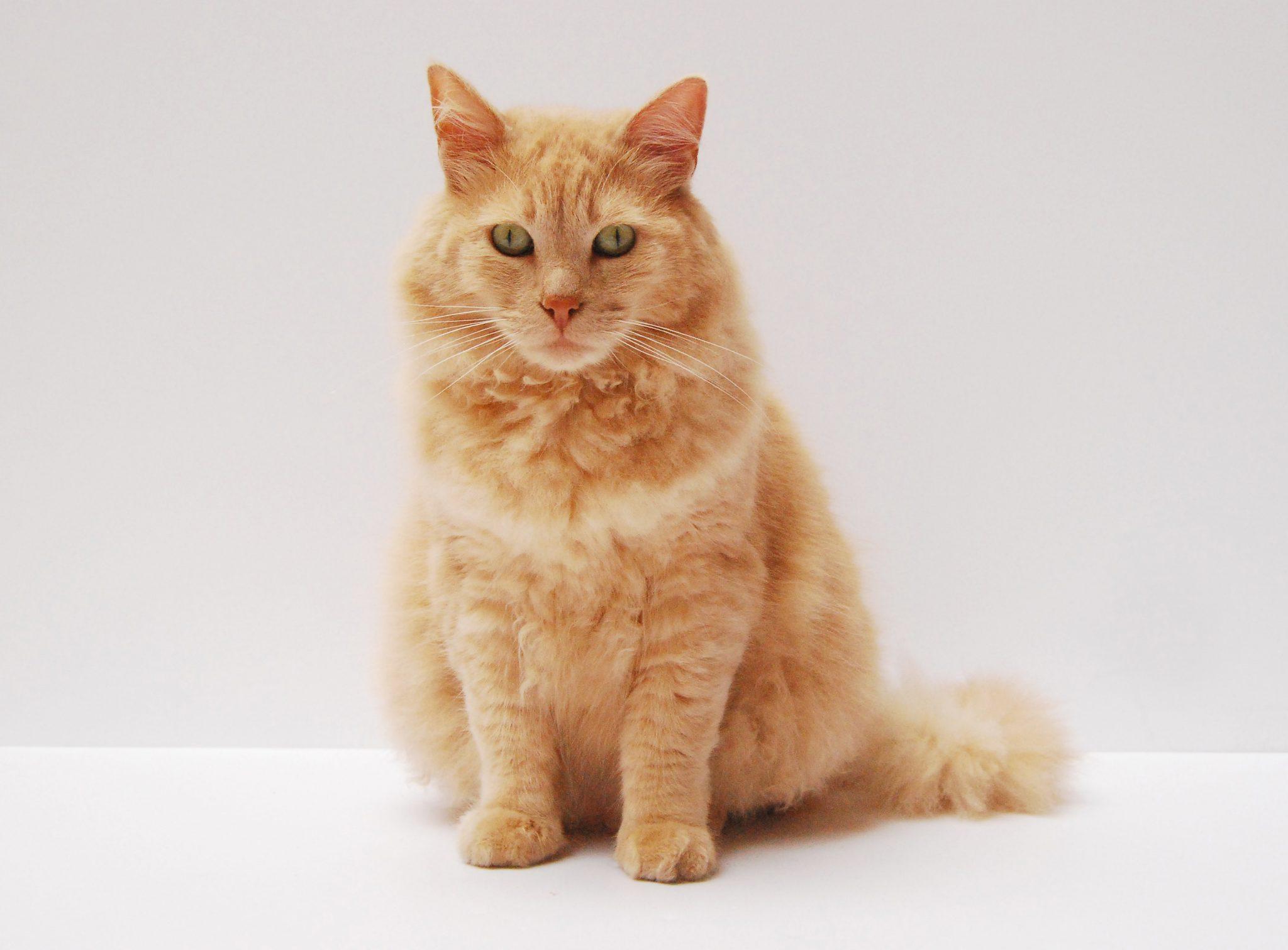 고양이 애교